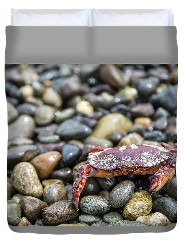 Water's Edge Duvet Cover featuring the photograph Red Rock Crab On A Pebble Covered Beach by Stevedf