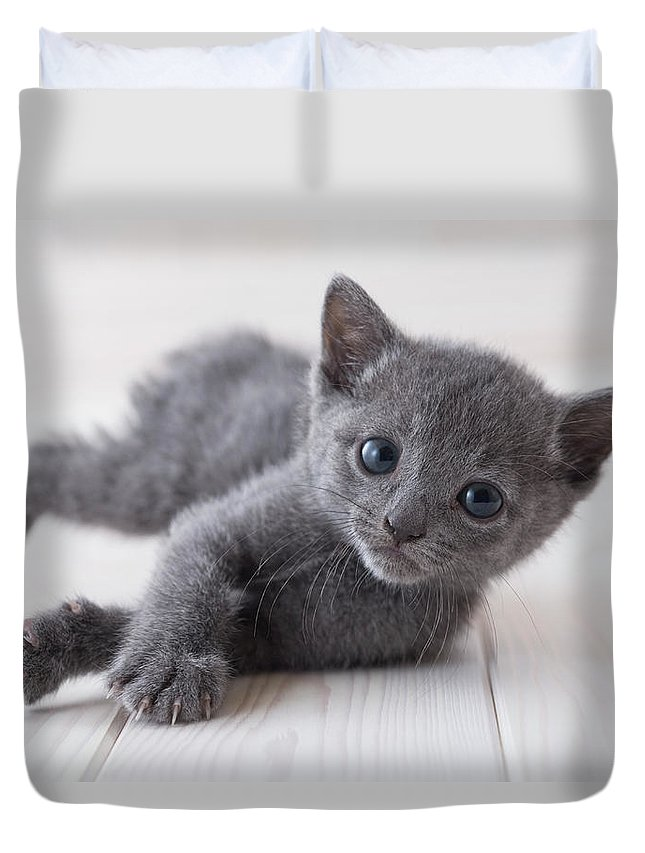 Pets Duvet Cover featuring the photograph Russian Blue Lying Down On Floor by Mixa
