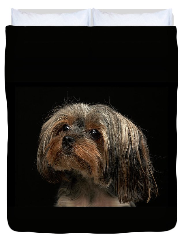 Pets Duvet Cover featuring the photograph Sad Yorking Face Looking To The Left by M Photo