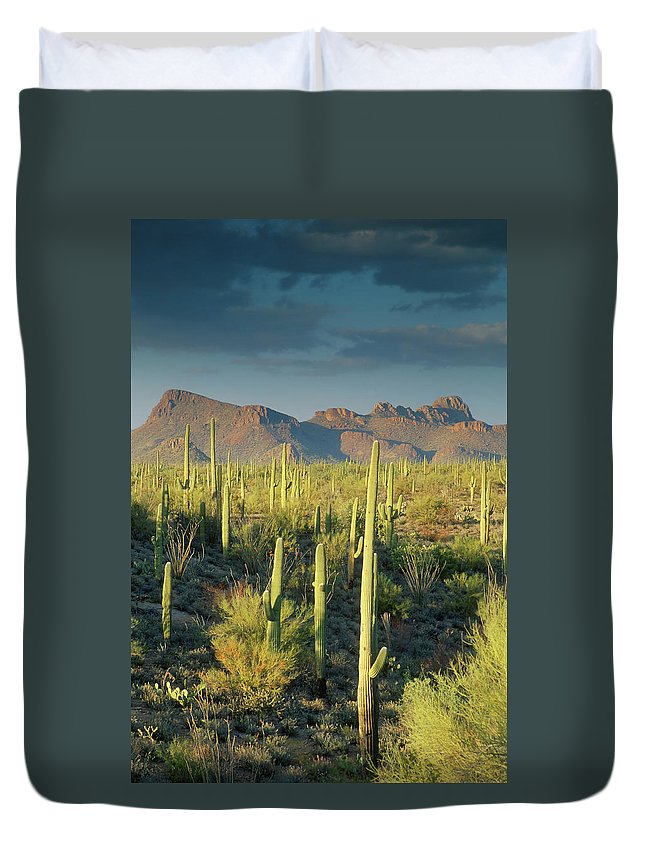 Saguaro Cactus Duvet Cover featuring the photograph Saguaro Cactus In Sonoran Desert And by Kencanning
