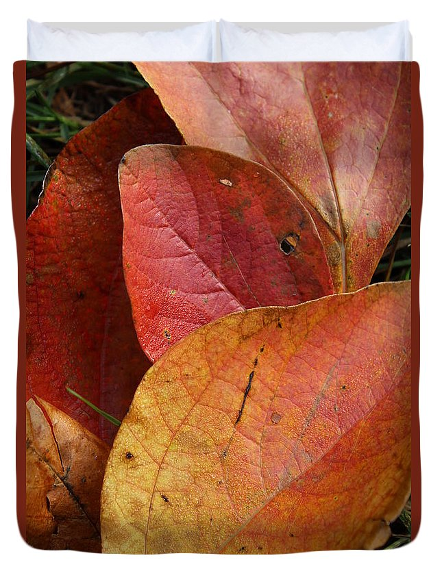Leaf Duvet Cover featuring the photograph Sassafras Autumn by Anne Ditmars