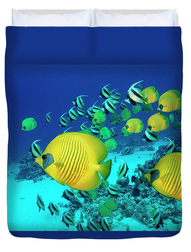 Underwater Duvet Cover featuring the photograph School Of Butterfly Fish Swimming On by Georgette Douwma