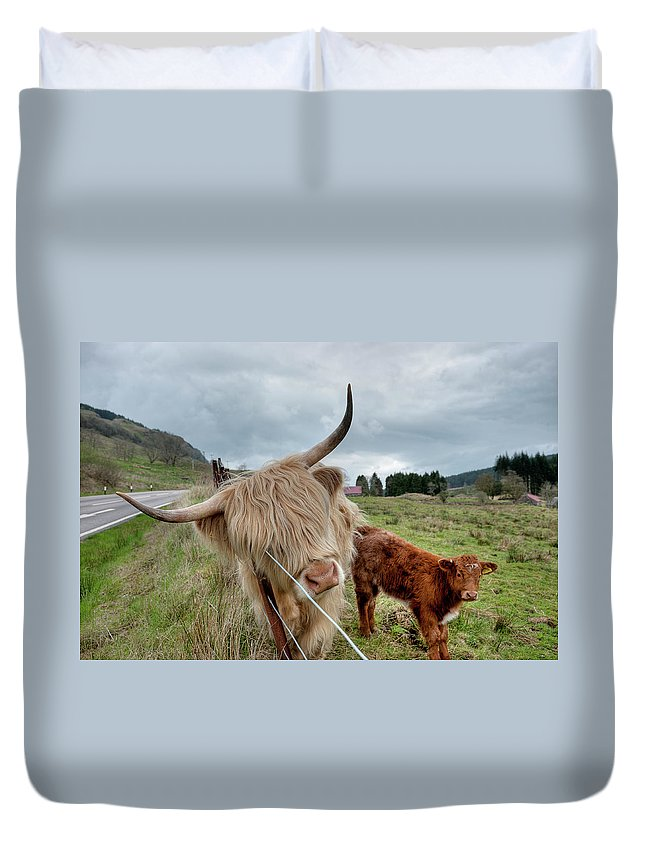 Horned Duvet Cover featuring the photograph Scottish Highland Cattle by Dominik Staszowski
