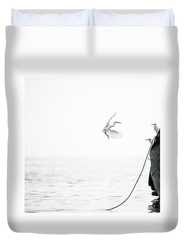 Animal Themes Duvet Cover featuring the photograph Sea Birds Of Shekou Shenzhen by Capturing A Second In Life, Copyright Leonardo Correa Luna