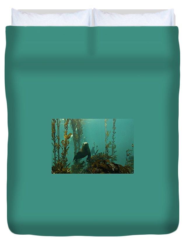Sea Lion Duvet Cover featuring the photograph Sealion by Douglas Klug