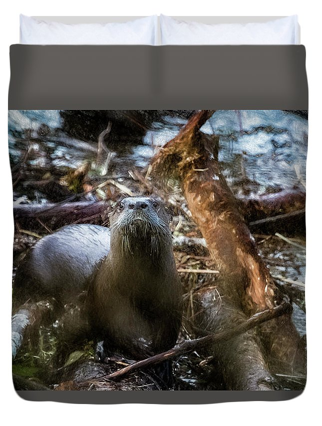North American River Otter Duvet Cover featuring the photograph Sensed But Not Seen by Belinda Greb