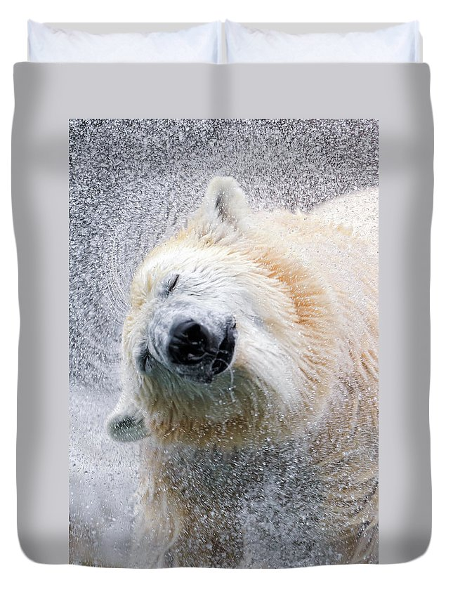 Animal Themes Duvet Cover featuring the photograph Shaking Polar Bear by Picture By Tambako The Jaguar