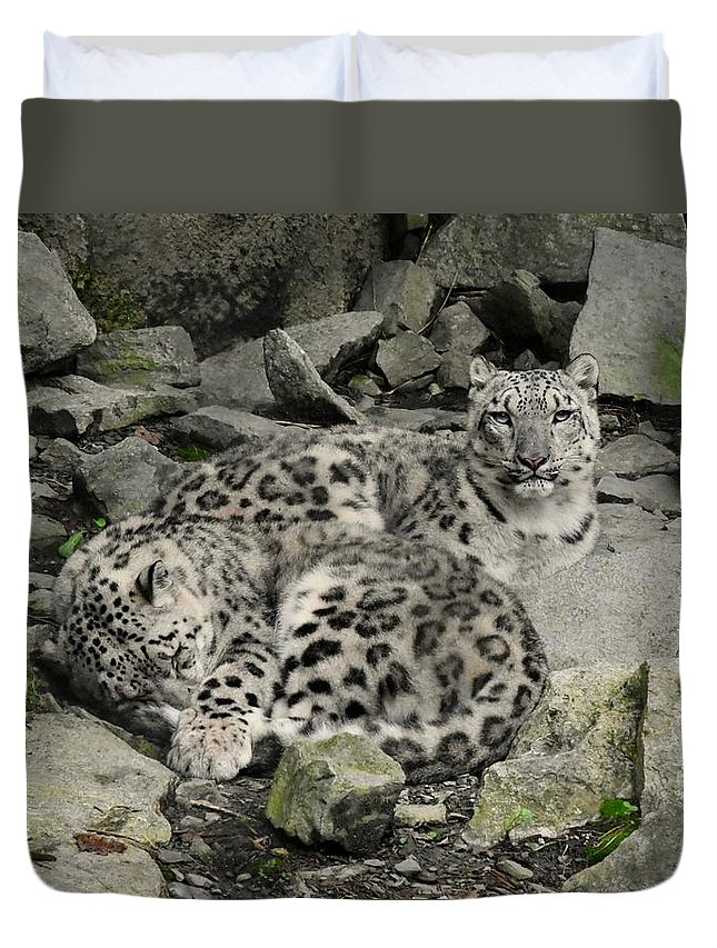 Leopards Duvet Cover featuring the photograph Siesta Sentinel by Laurie Hein