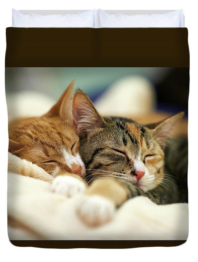 Shimonoseki Duvet Cover featuring the photograph Sleeping Kittens by Akimasa Harada