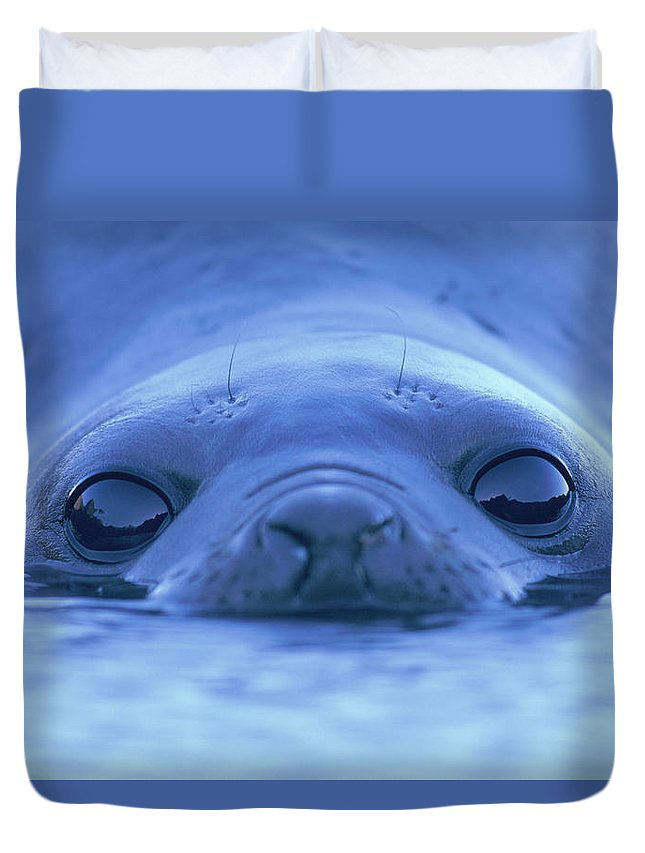 Animal Themes Duvet Cover featuring the photograph Southern Elephant Seal Mirounga Leonina by Paul Souders