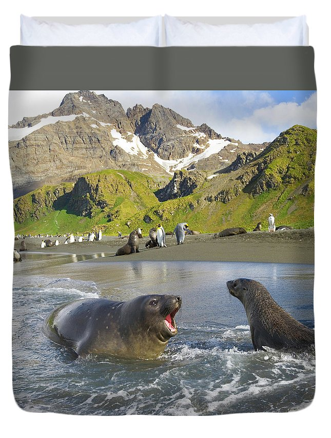 South Georgia Island Duvet Cover featuring the photograph Southern Elephant Seal Pup Barking At by Eastcott Momatiuk