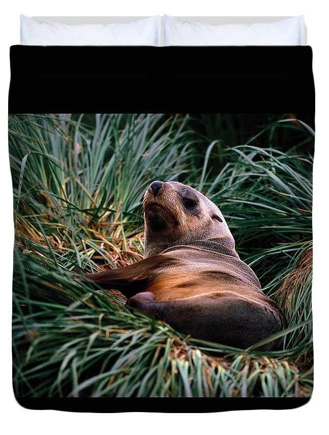 Grass Duvet Cover featuring the photograph Southern Fur Seal Arctocephalus Gazella by Art Wolfe