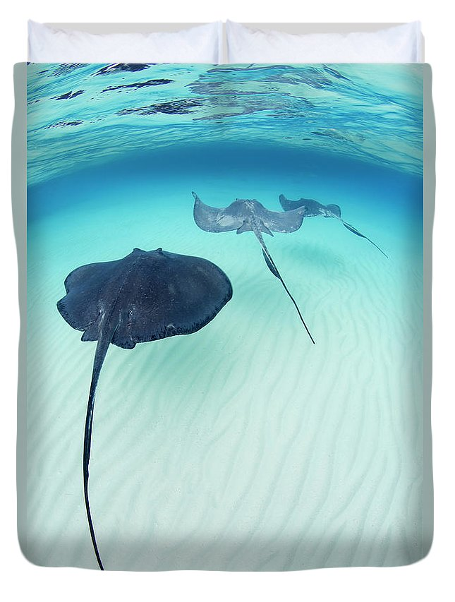 Underwater Duvet Cover featuring the photograph Southern Stingray Cayman Isalnds by Justin Lewis