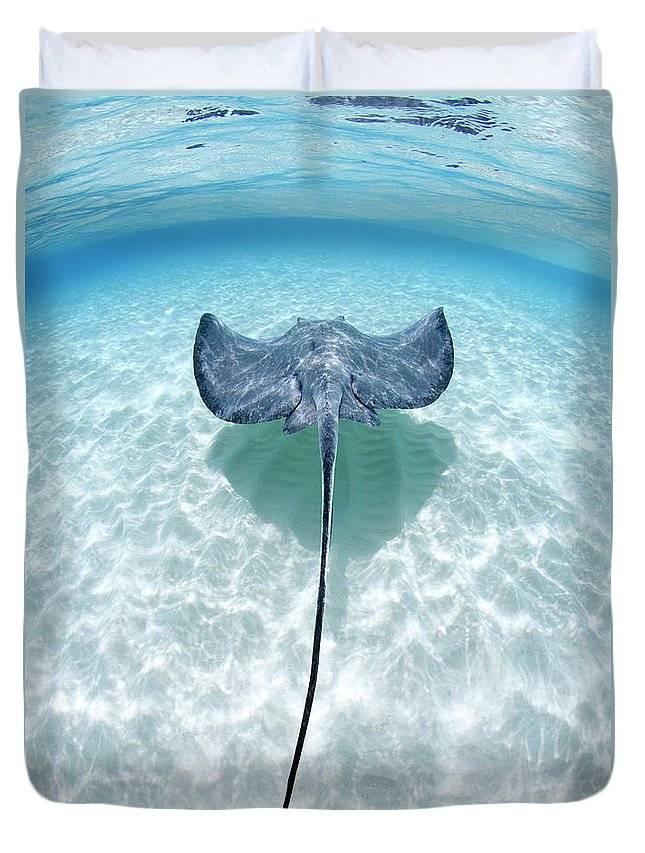 Underwater Duvet Cover featuring the photograph Southern Stingray Cayman Islands by Justin Lewis
