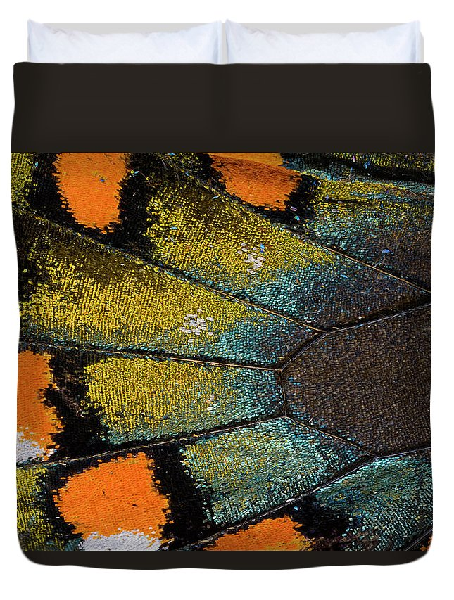 Natural Pattern Duvet Cover featuring the photograph Spicebush Swallowtail Butterfly Wing by Darrell Gulin