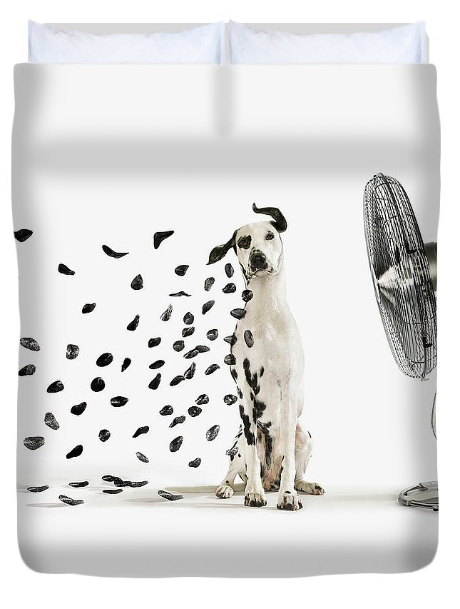 Pets Duvet Cover featuring the photograph Spots Flying Off Dalmation Dog by Gandee Vasan