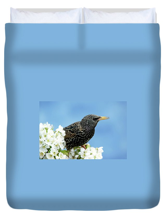 Songbird Duvet Cover featuring the photograph Star In Springtime by Schnuddel
