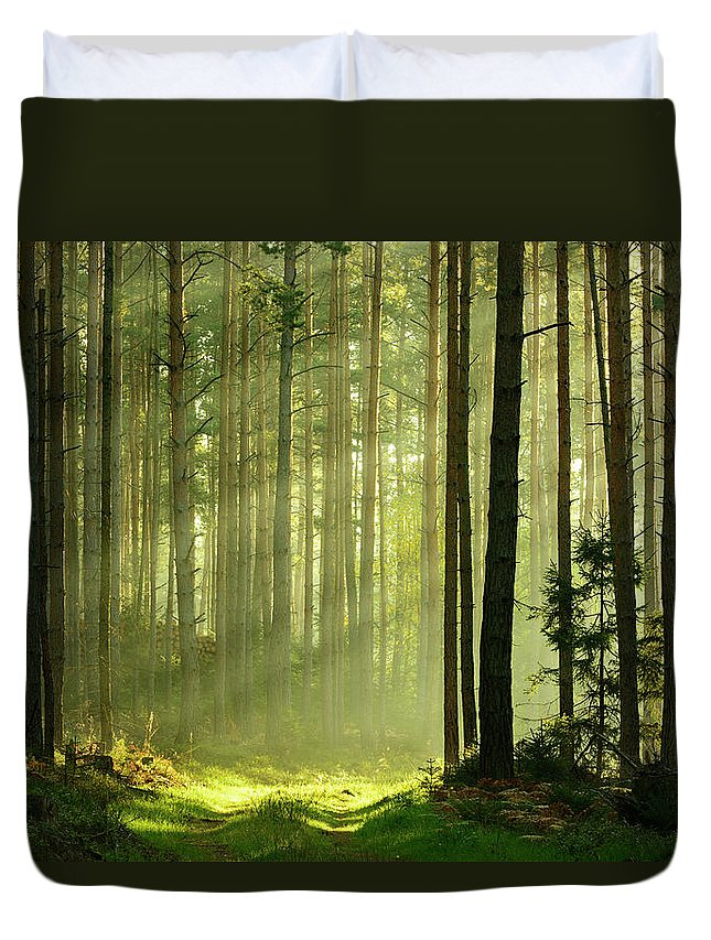 Scenics Duvet Cover featuring the photograph Sunbeams Breaking Through Pine Tree by Avtg