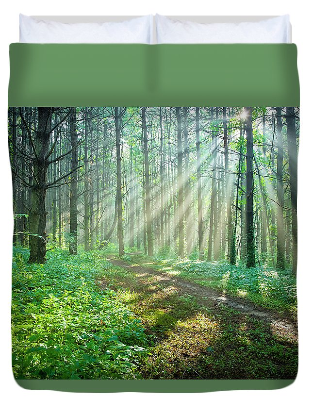 Outdoors Duvet Cover featuring the photograph Sunbeams Filtering Through Trees On A by Drnadig