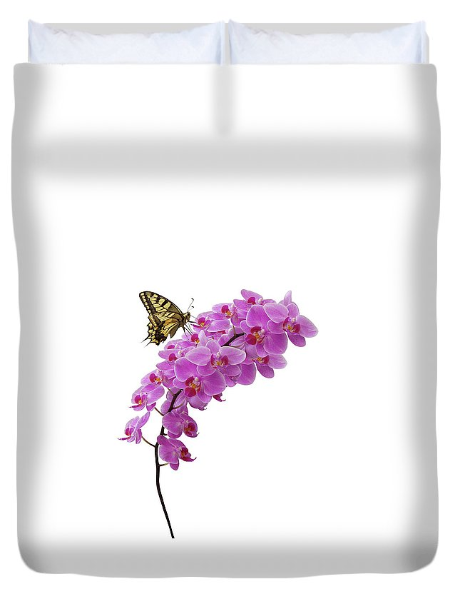 White Background Duvet Cover featuring the photograph Swallowtail Butterly On Orchid by Photographerolympus
