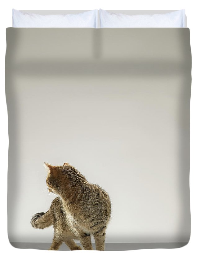 Pets Duvet Cover featuring the photograph Tabby Cat Looking Behind by Michael Blann