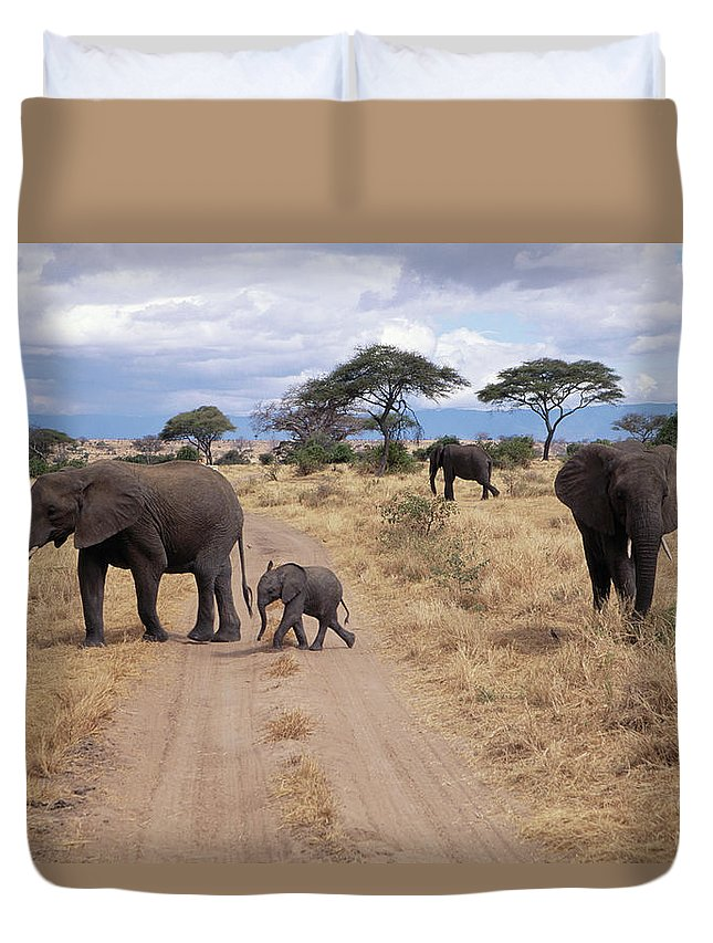 Tanzania Duvet Cover featuring the photograph Tanzania, Tarangire Np, African by John & Lisa Merrill