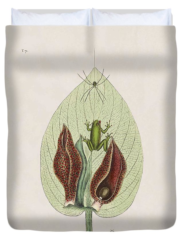 Mark Catesby Duvet Cover featuring the painting The Green Tree Frog And The Skunk Weed The Natural History Of Car by Mark Catesby