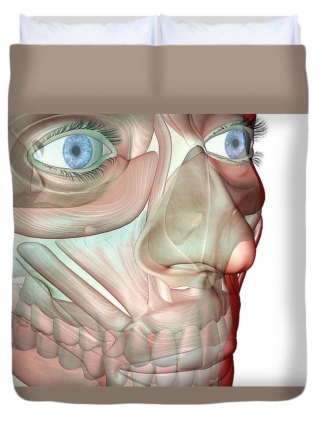 White Background Duvet Cover featuring the digital art The Musculoskeleton Of The Face by Medicalrf.com