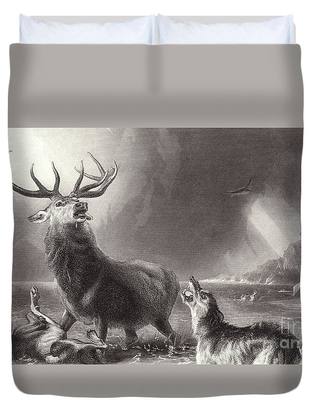 Landseer Duvet Cover featuring the drawing The Stag At Bay by Edwin Landseer