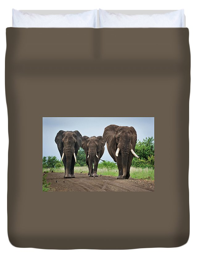Toughness Duvet Cover featuring the photograph Three Big Elephants On A Dirt Road by Johansjolander