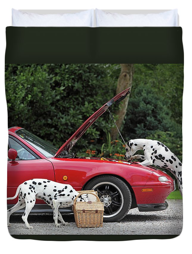 Pets Duvet Cover featuring the photograph Three Dalmatians Around Red Sports Car by Peter Cade