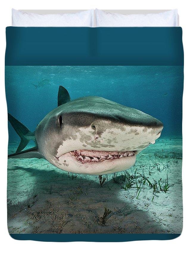 Underwater Duvet Cover featuring the photograph Tiger Sharks Galeocerdo Cuvier Are by Rodrigo Friscione