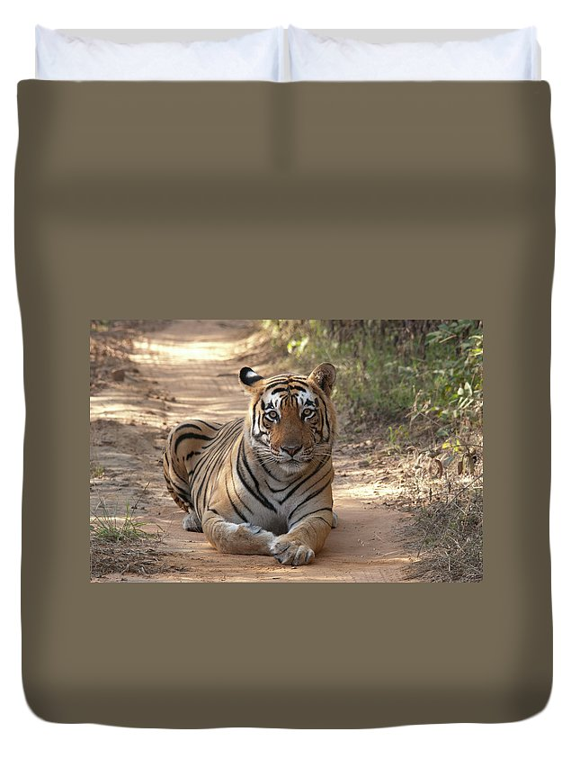 Ranthambore National Park Duvet Cover featuring the photograph Tiger Sitting On Field by Chaithanya Krishna Photography