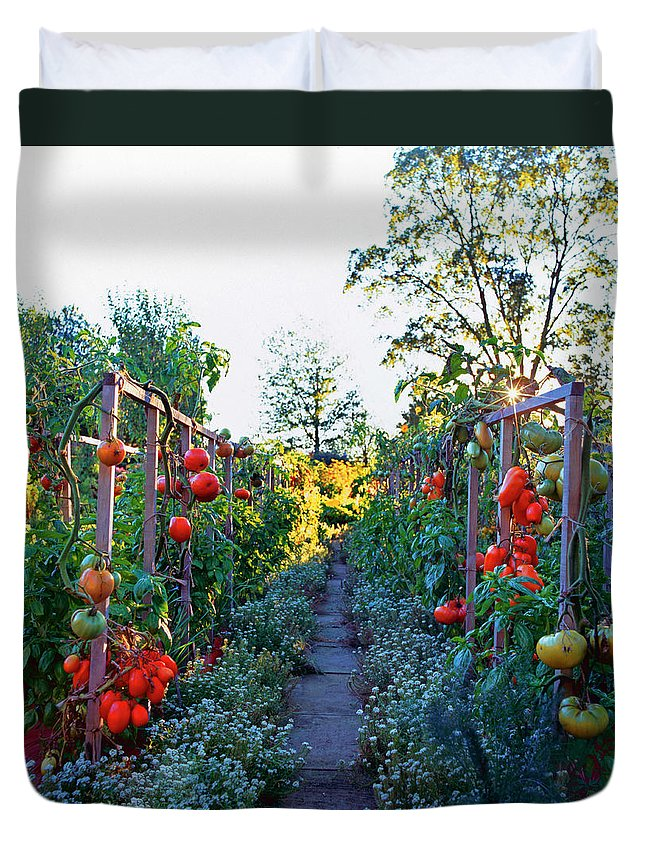 Community Garden Duvet Cover featuring the photograph Tomatoes On Frames by Richard Felber