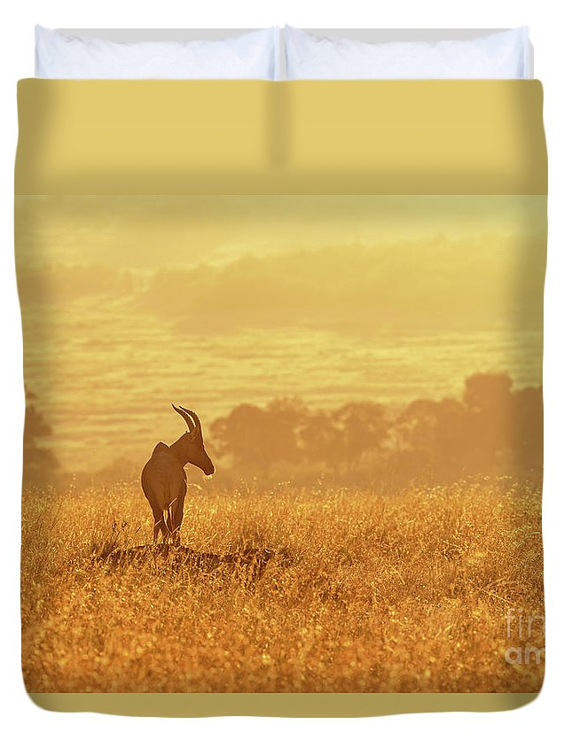 Safari Duvet Cover featuring the photograph Topi In Early Morning Sunlight by Jane Rix