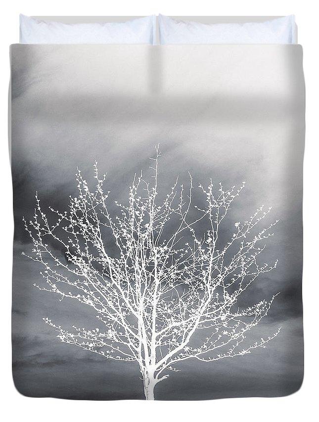 Designs Similar to Tree Series Two by Hyuntae Kim