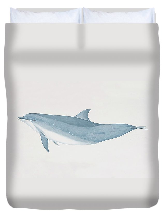 White Background Duvet Cover featuring the digital art Tursiops Truncatus, Bottlenose Dolphin by Martin Camm