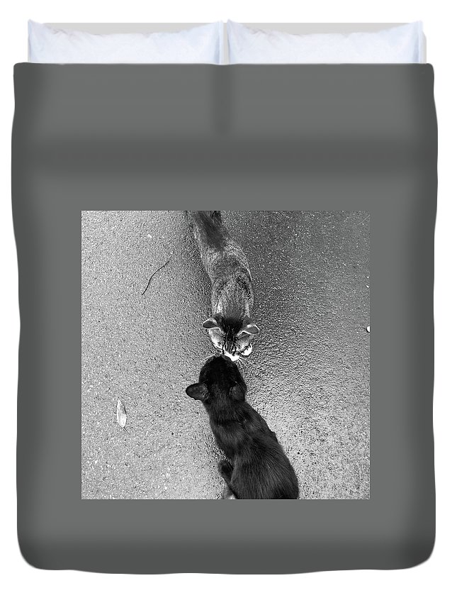 Pets Duvet Cover featuring the photograph Two Kittens Which Kiss by Photographer, Loves Art, Lives In Kyoto