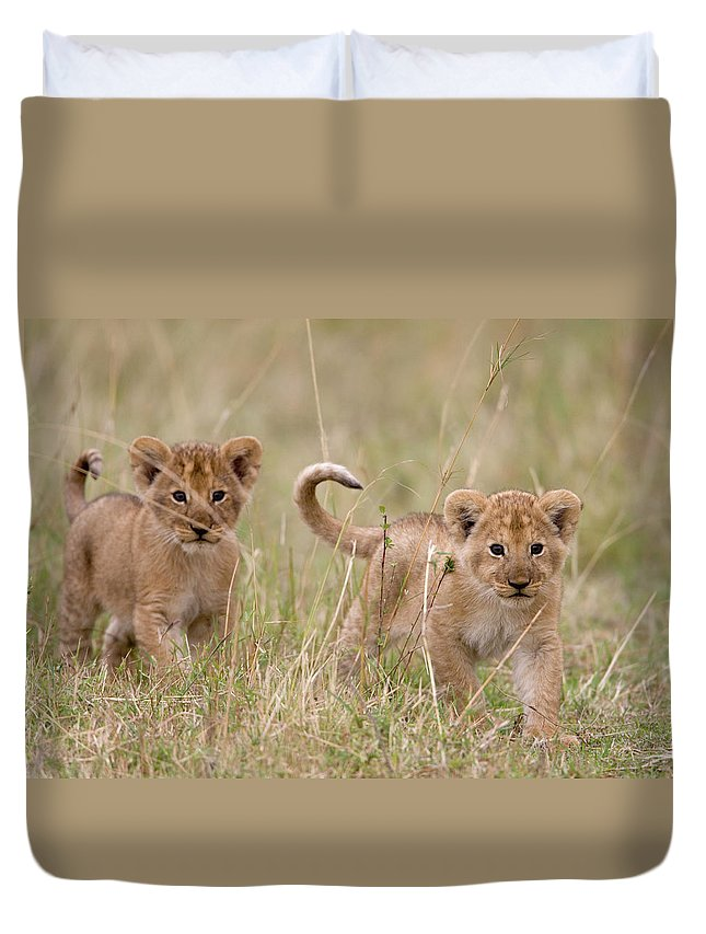 Kenya Duvet Cover featuring the photograph Two Lion Panthera Leo Cubs Walking by Paul Souders