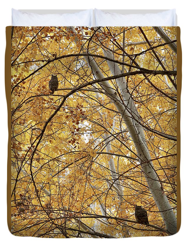 Owl Duvet Cover featuring the photograph Two Owls In Autumn Tree by Carol Groenen