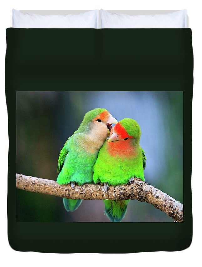 Togetherness Duvet Cover featuring the photograph Two Peace-faced Lovebird by Feng Wei Photography