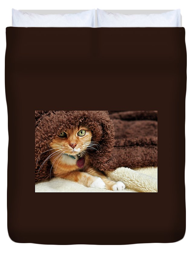 Pets Duvet Cover featuring the photograph Under Wraps by Barbara Taeger Photography