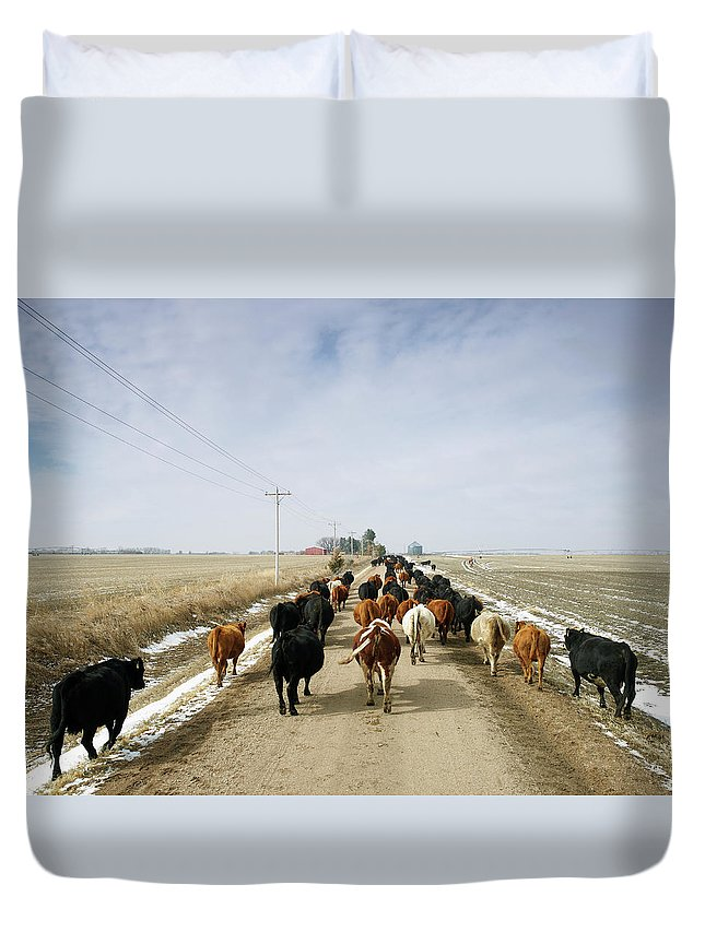 Cattle Drive Duvet Cover featuring the photograph Usa, Nebraska, Great Plains, Herd Of by John Kelly