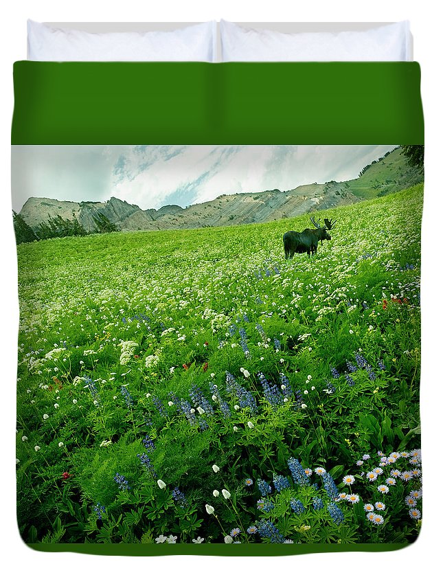 Non-urban Scene Duvet Cover featuring the photograph Usa, Utah, Wasatch National Forest, Mt by John Wang