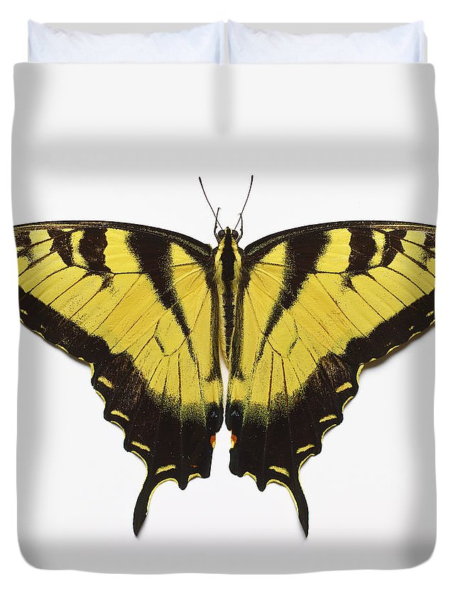 White Background Duvet Cover featuring the photograph Western Tiger Swallowtail Butterfly by Don Farrall