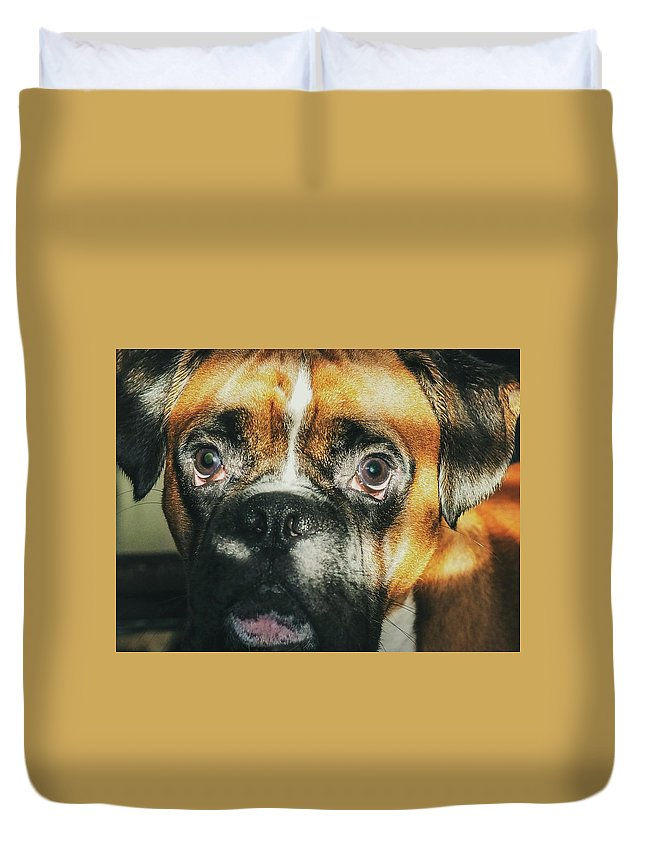 Dog Duvet Cover featuring the photograph Where'd Everybody Go by CWinslow Shafer