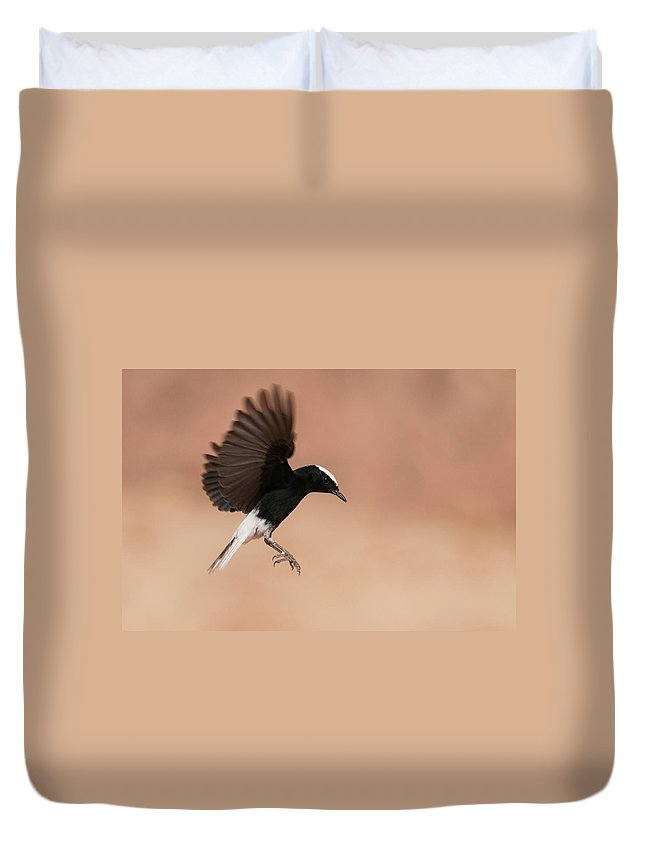 Eilat Duvet Cover featuring the photograph White Crowned Wheatear by Dorit Bar-zakay
