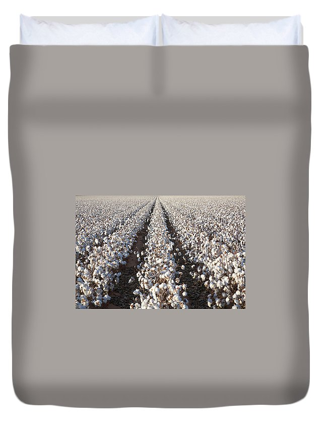 Scenics Duvet Cover featuring the photograph White Ripe Cotton Crop Plants Rows by Dszc