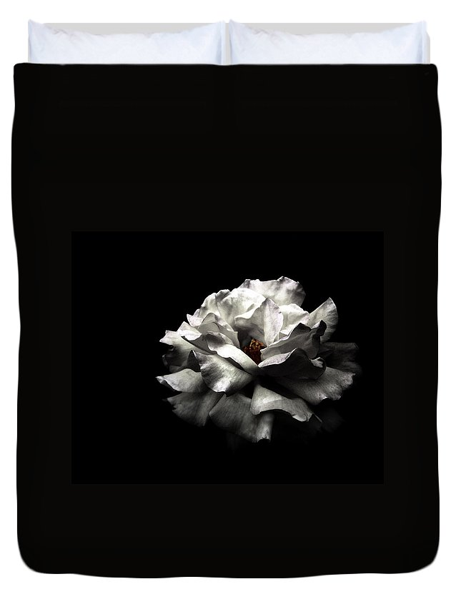 Black Background Duvet Cover featuring the photograph White Rose by Lola L. Falantes