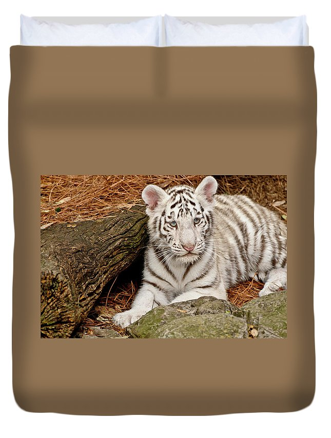 White Tiger Duvet Cover featuring the photograph White Tiger Cub by Empphotography